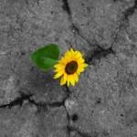 Over moed en veranderen