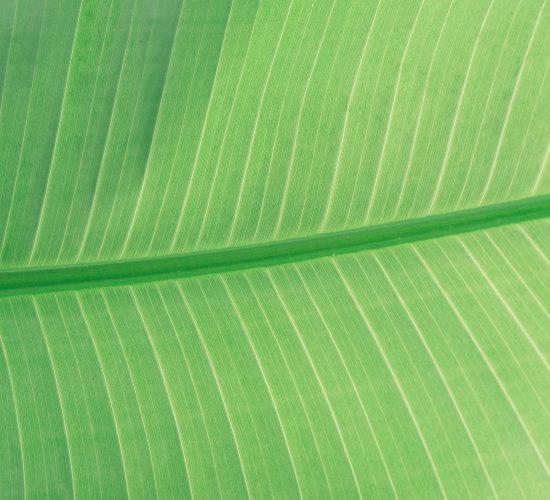 photo-scott-webb-unsplash-leaf