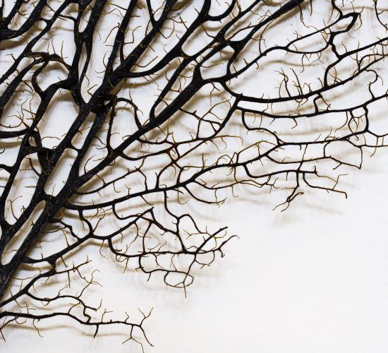 Tree branches by Ron Whitaker on Unsplash