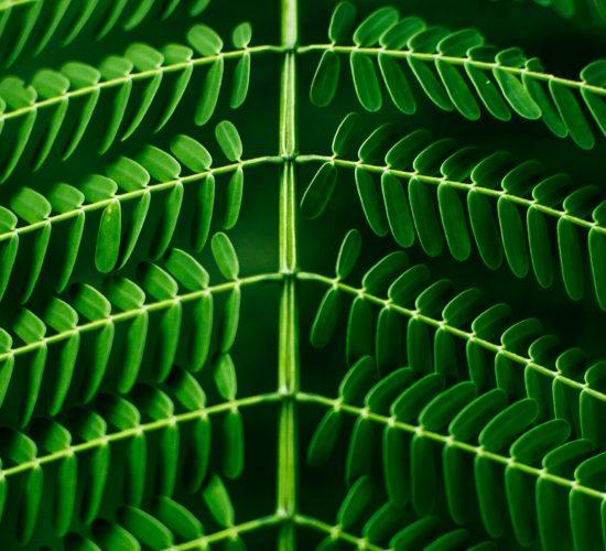 Leaf_Pattern photo by pandu ior on unsplash