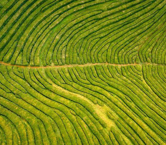 fractaal rijstvelden